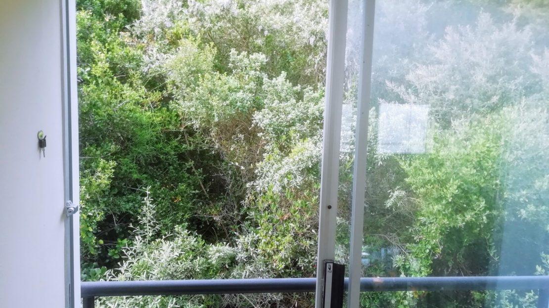 Dahlia Street House Green View