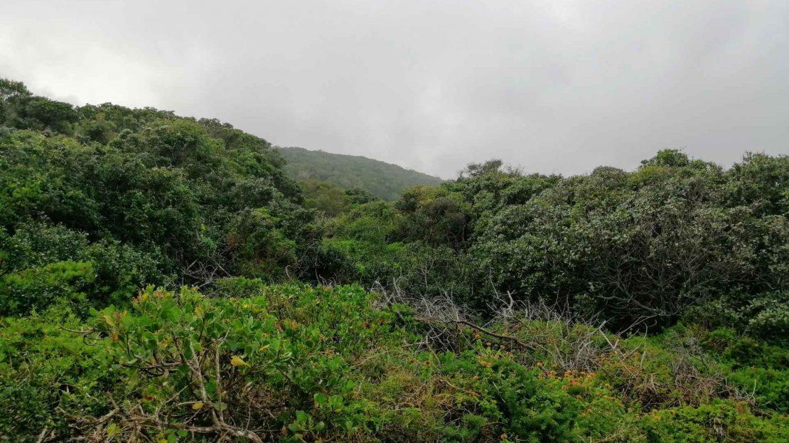 Hyacinth Road Plot For Sale Bhb